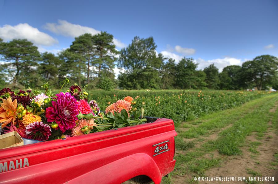 Dahlia Acres Farm Pick Your Own Flowers Allendale Mi Michigan